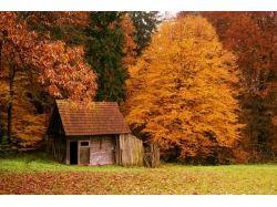 Домики в лесу фото