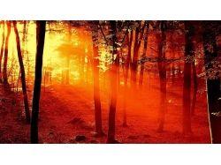 Пожар в лесу картинки