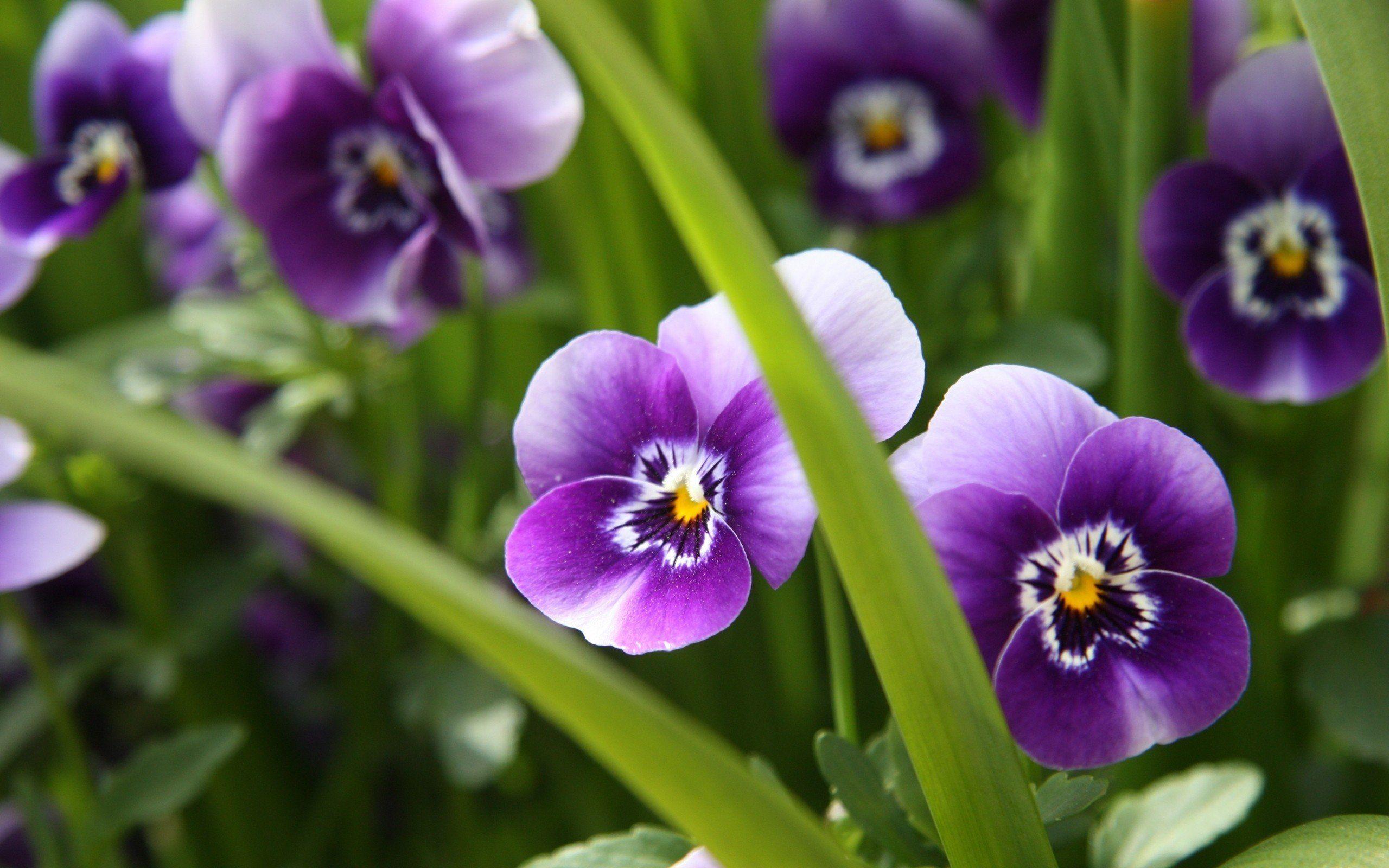 Картинки на заставку растения