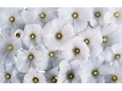 Цветы на стену картинки