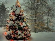 Новогодние елки картинки на рабочий стол