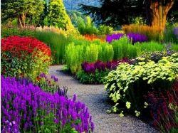 Сад с цветами фото