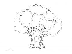 Картинки дерево дуб