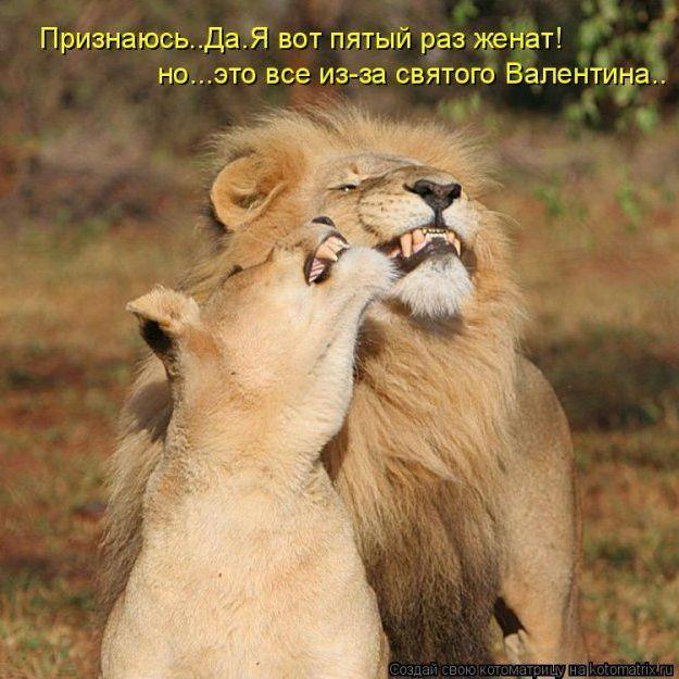 Картинках, картинки льва и львицы с надписями