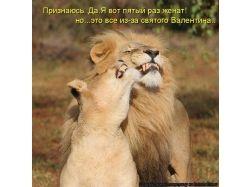 Картинки лев и львица