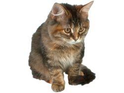 Фотографии с котятами