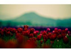 Красные цветы обои