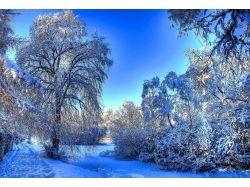 Фото зимы в лесу