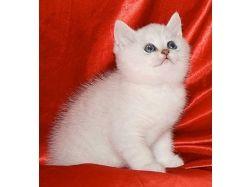Картинки маленьких котят