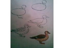 Птицы алтайского края фото