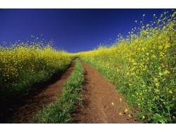 Цветочное поле фото