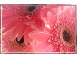 Красивые цветы открытки