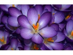 Цветы скачать бесплатно картинки