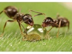 Животные картинки насекомые