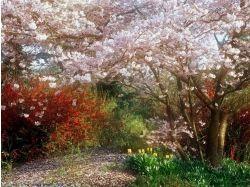 Сочи весной фото