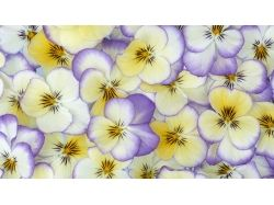 Нежные цветы обои
