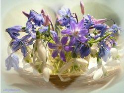 Первоцветы рисунок