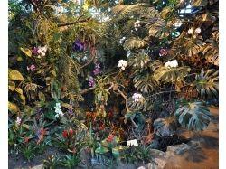Как растут орхидеи в природе фото