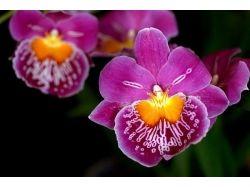 Самые красивые цветы картинки