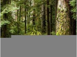 Картинки леса