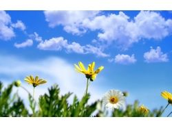 Картинки цветы природа
