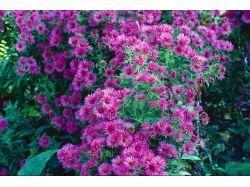Садовые цветы названия
