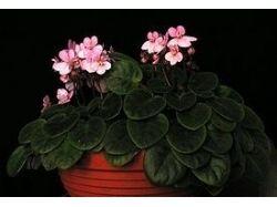 Комнатные цветы с фото и названием