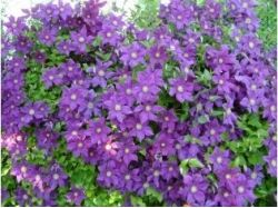 Как сделать цветок фото 3