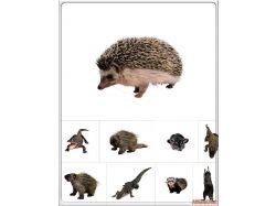 Скачать картинки диких животных