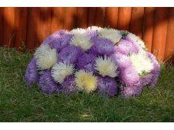 Офисные цветы фото