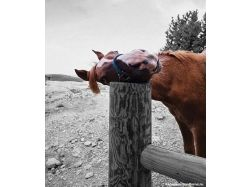 Прикольные рисунки лошадей