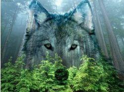 Картинки волков на аву 6