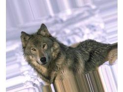 Картинки волков на аву 8