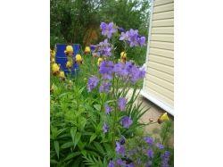 Каталог многолетних цветов с фото