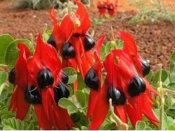 Каталог многолетних цветов с фото 2