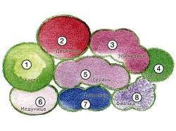 Каталог многолетних цветов с фото 3