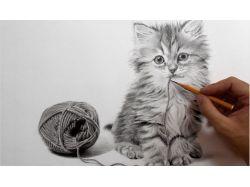 Рисунок кота карандашом 3