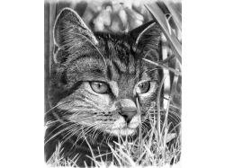 Рисунок кота карандашом 7