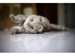 Скачать картинки котят и щенят