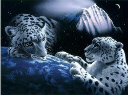 Красивые картинки дикие кошки