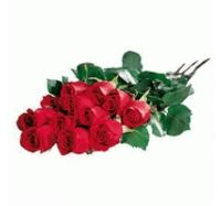 Цветы васильки фото 7
