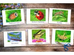 Картинки насекомых для детей 3