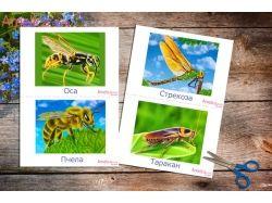 Картинки насекомых для детей 6