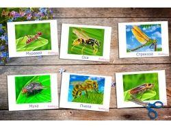Картинки насекомых для детей 7