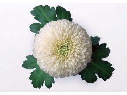 Смайлики цветы 1