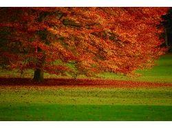 Картинки осень для рабочего стола
