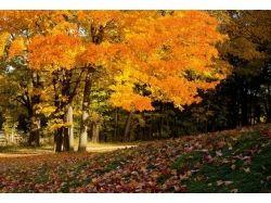 Картинки осень для рабочего стола 4