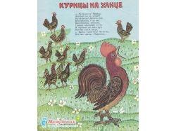 Картинка курицы 2