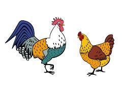 Картинка курицы 7
