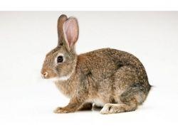 Картинки заяц для детей 1